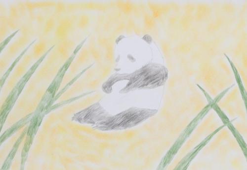 癒しのパンダ