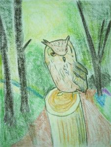 森のフクロウ