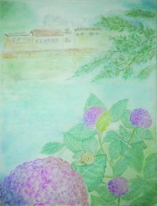 紫陽花のあたる場所