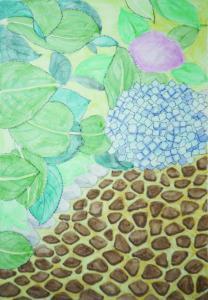 鎌倉のアジサイが咲く頃